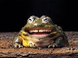 frog-smiling