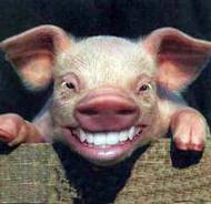 pig-smiling