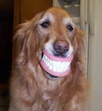 naturesdental dr olga isaeva Dog smiling